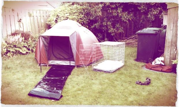 Backyard Camping 1